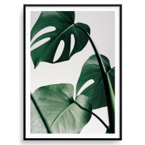 Monstera plante plakat