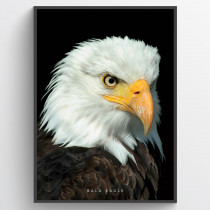 Bald Eagle - plakat