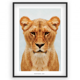 The lioness - plakat wallsticker