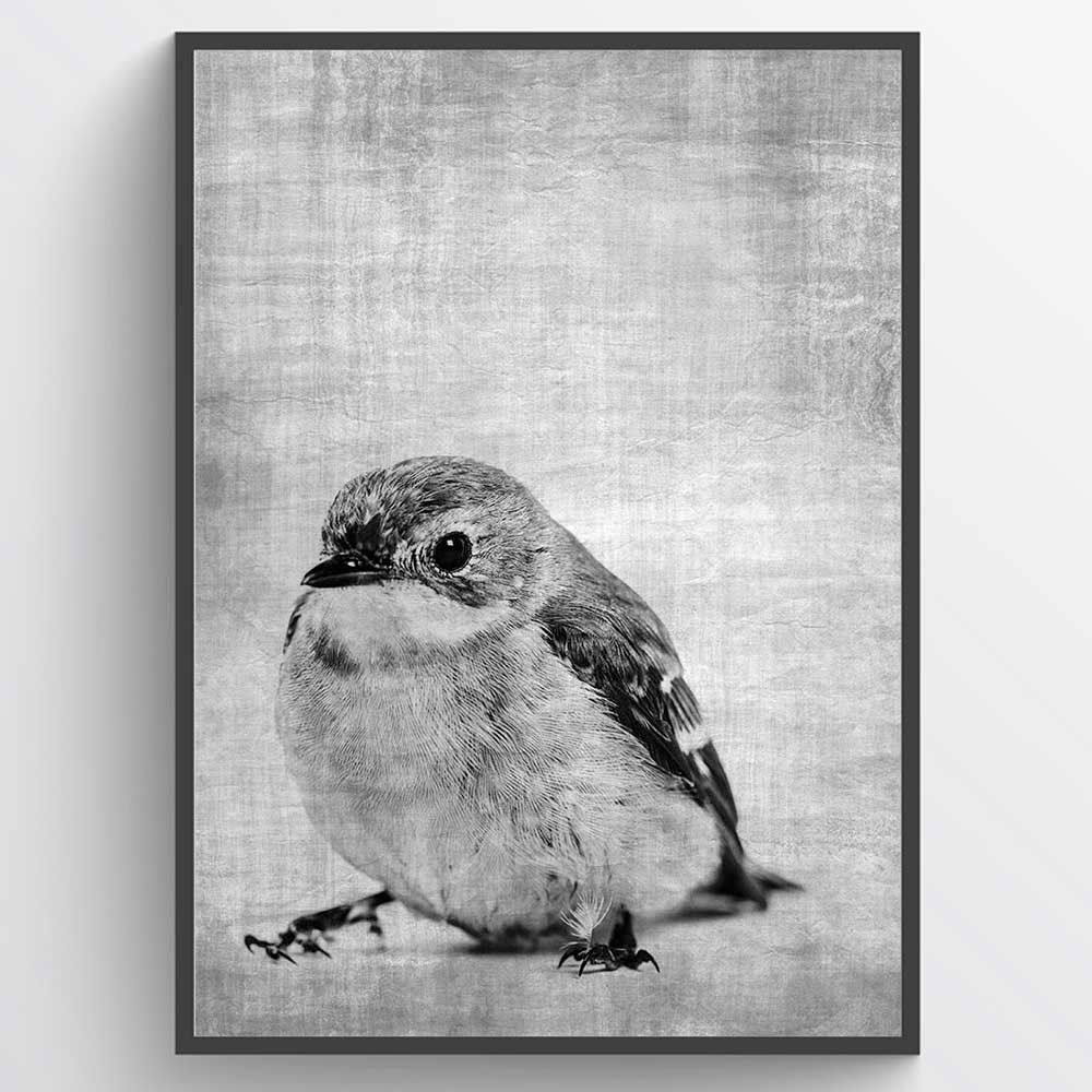 Texture bird - plakat wallsticker