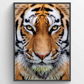 Tiger plakat wallsticker