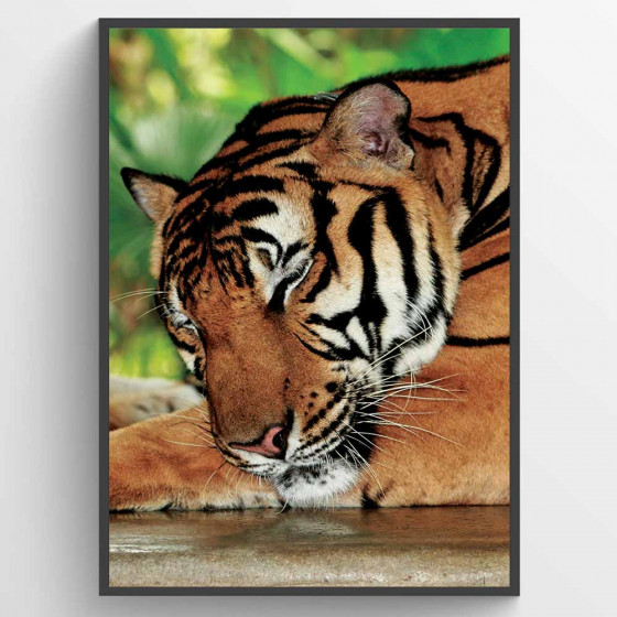 Sleeping tiger plakat wallsticker
