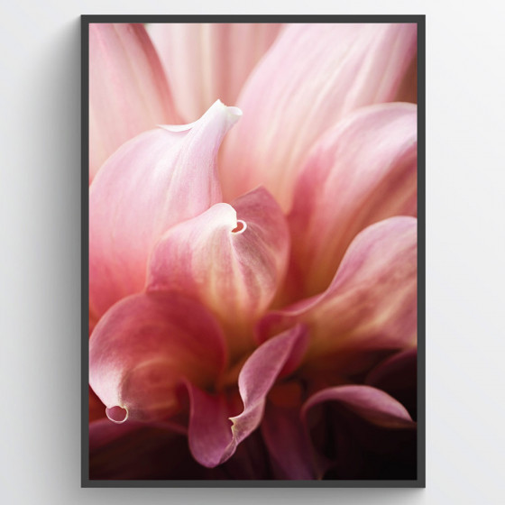 Blomst closeup plakat wallsticker