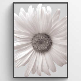 Marguerit #1 - plakat wallsticker