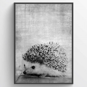 Texture hedgehog - plakat wallsticker