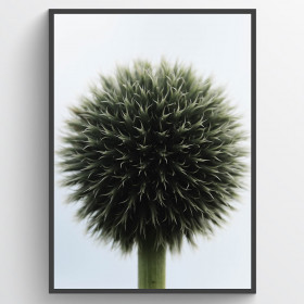 Ball plant plakat wallsticker