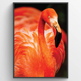 Flamingo - plakat wallsticker